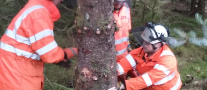 Maintenance and Safe Operation of Chainsaws, Crosscutting & Felling Small Trees